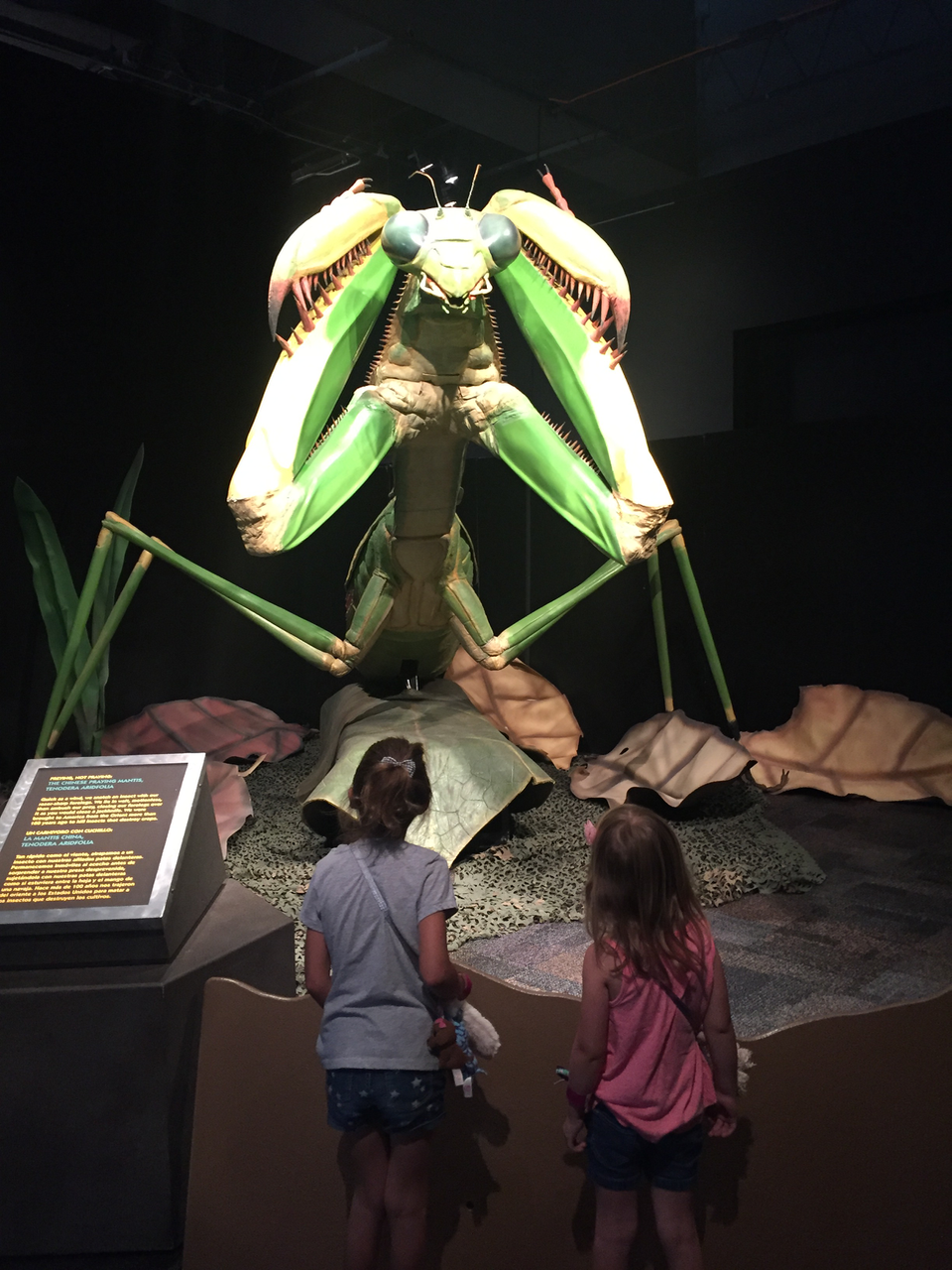 Science museum- bug exhibit