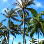 Flower family Hawaiian vacation: Part 2